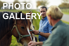 Vet and Horses - Photo Gallery Button