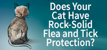 Does Your Cat Have Rock-Solid Flea and Tick Protection?