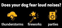 Does your dog fear loud noises?