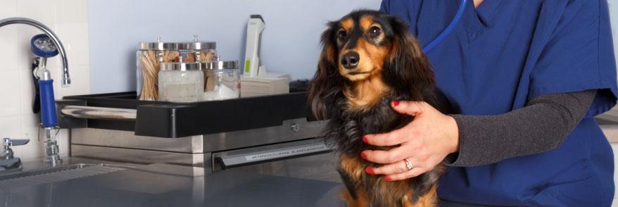 Osteoarthritis in Dogs | Zoetis UK