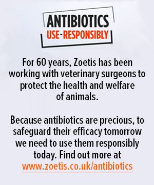 Antibiotics: Use Responsibly