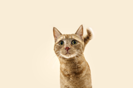 Cat on beige background